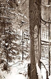 Зарубки на деревьях оставленные Манси