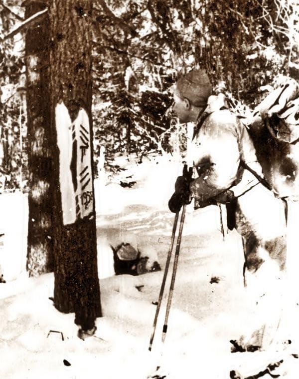 Кривонищенко Юрий рассматривает оставленные Манси знаки на дереве