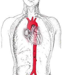 Изображение аорты